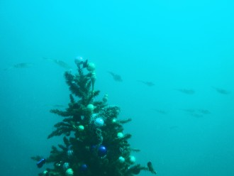 Christmas Tree Under Water